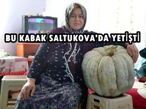 SALTUKOVA'DA BİR ÇİFTÇİ BAHÇESİNDE 50 KİLO AĞIRLIĞINDAKİ KABAĞI GÖRÜNCE ŞOK OLDU (GÖRÜNTÜLÜ)