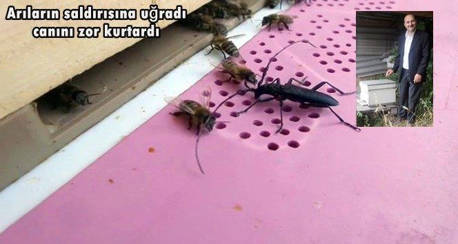 Belgeselde gördüğünü uygulamaya kalkınca arıların saldırısına uğradı