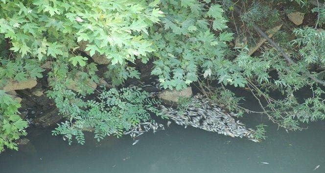 Irmakta Binlerce Balık Telef Oldu