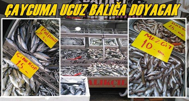Balık Fiyatları Çaycuma'da Ucuzladı