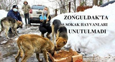 Zonguldak'ta sokak hayvanları unutulmadı