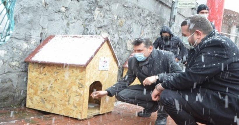 Çaycuma'da sokak hayvanları için yapılan kulübeler kentin çeşitli noktalarına konuldu.