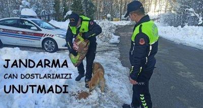 Jandarma ekipleri soğuk kış günlerinde can dostlarımızı unutmadı