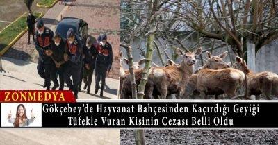 Zonguldak'ta hayvanat bahçesinden kaçırdığı alageyiği tüfekle vuran kişinin cezası belli oldu