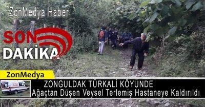 Zonguldak Türkali köyünde ağaçtan düşen Veysel Terlemiş hastaneye kaldırıldı.