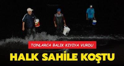 Bartın'ın Amasra ilçesinde tonlarca balık kıyıya vurdu