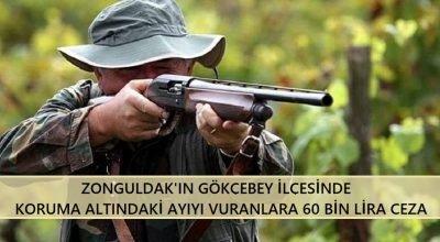 Zonguldak'ın Gökçebey ilçesinde koruma altındaki ayıyı vuranlara 60 bin lira ceza